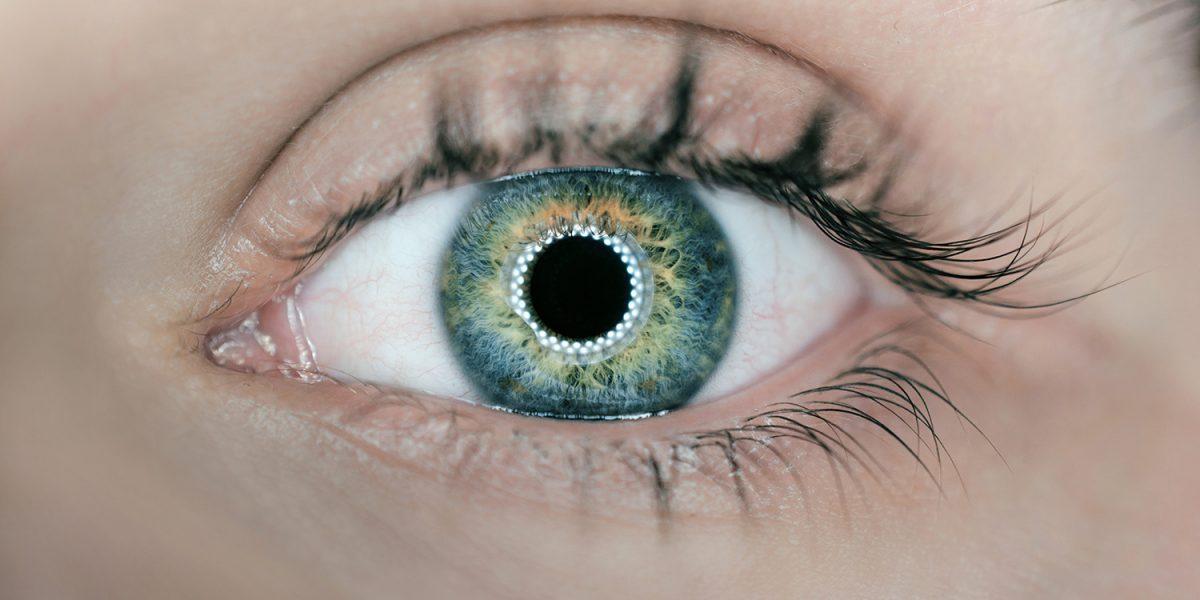 oeil-lentilles